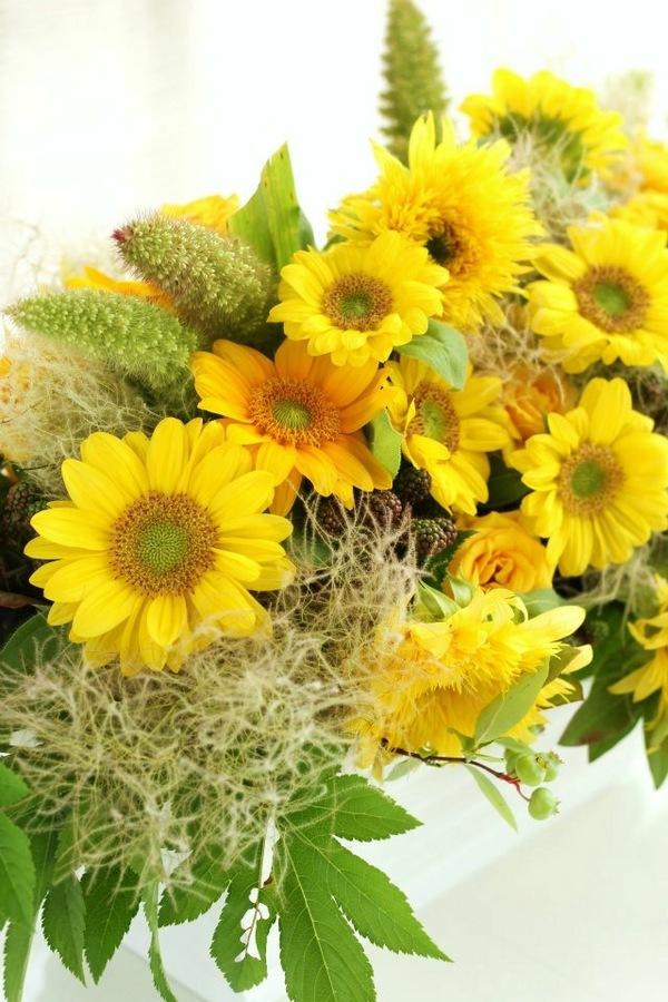 ひまわりの花に纏わるいろいろ