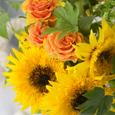 Sunflower* ひまわりの似合う季節の画像6