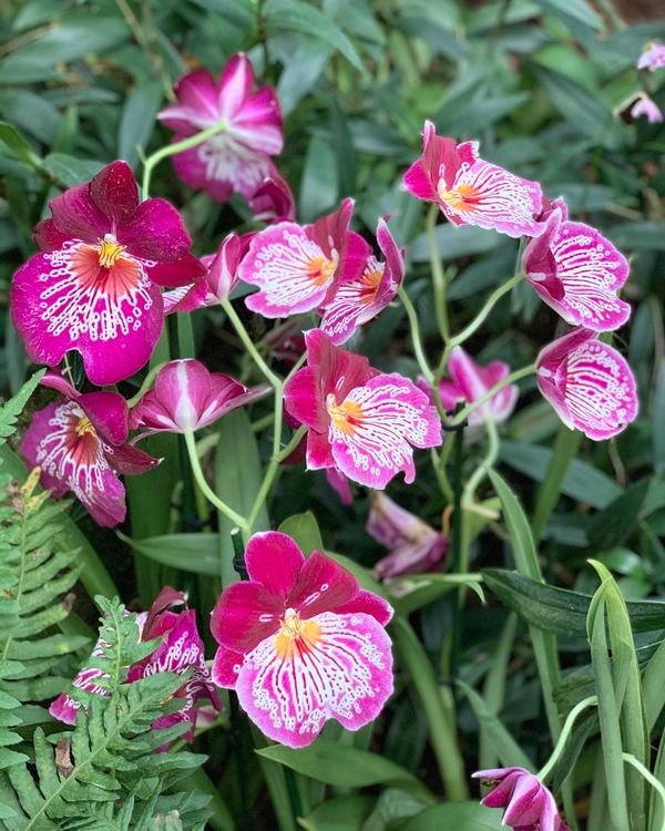 美しい蘭の花が沢山楽しめたキューガーデン