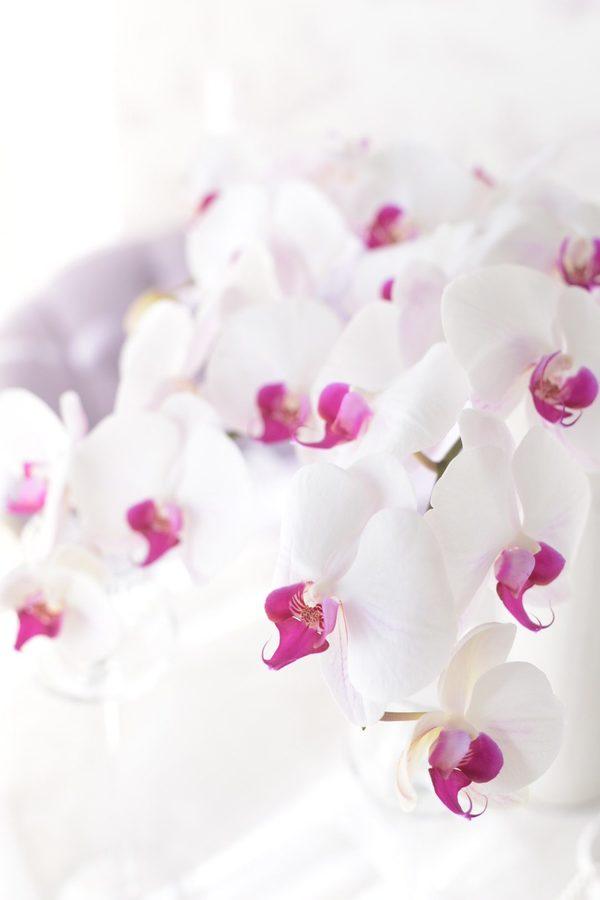 Orkid*蘭の花の歴史コラム