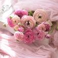 ピンク色ラナンキュラスのブーケの画像5