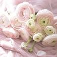 ピンク色ラナンキュラスのブーケの画像4